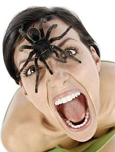 Spiderwoman!