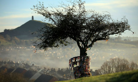 Glastonbury Holy Thorn Tree, Wearyall Hill
